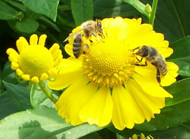 Citaten Over Bijen : Bits and bees een webstee met bijna alles over bijen en